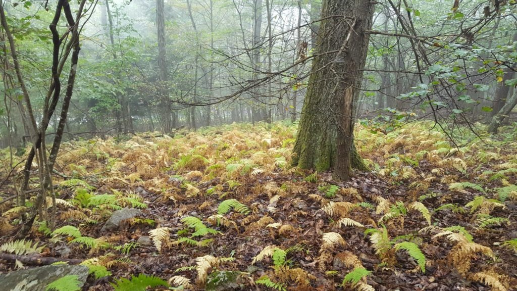 Ferns covering the forest floor