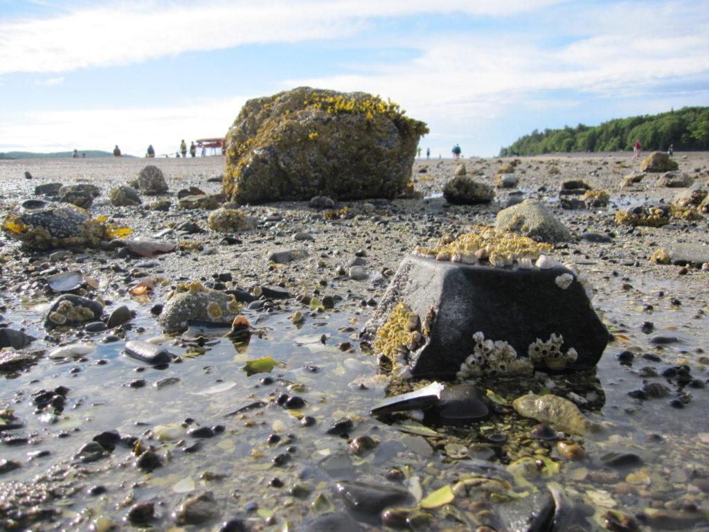 Acadia: Rock on Sandbar