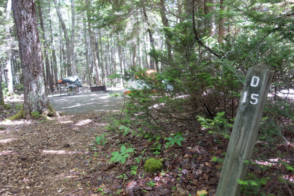 Acadia: Seawall Campground Site D15