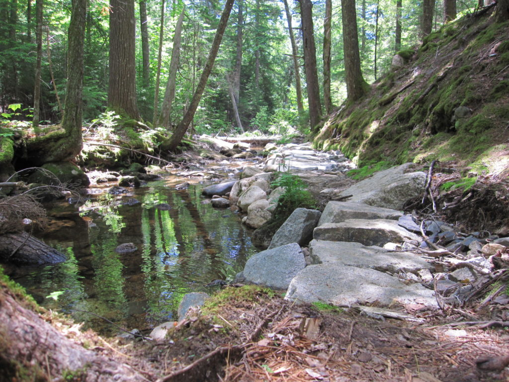 Acadia: Stone path by Jordan Stream