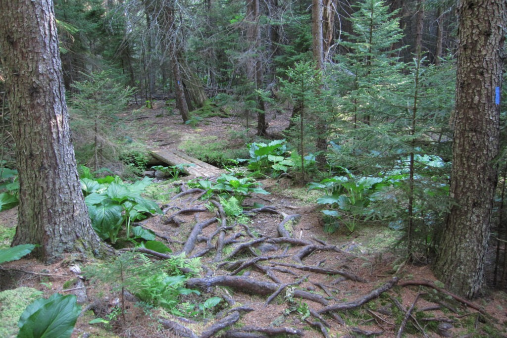 Acadia: Duck Harbor Trail Boardwalk