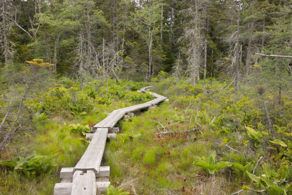 Acadia: Boardwalk on the Goat Trail on Isle au Haut