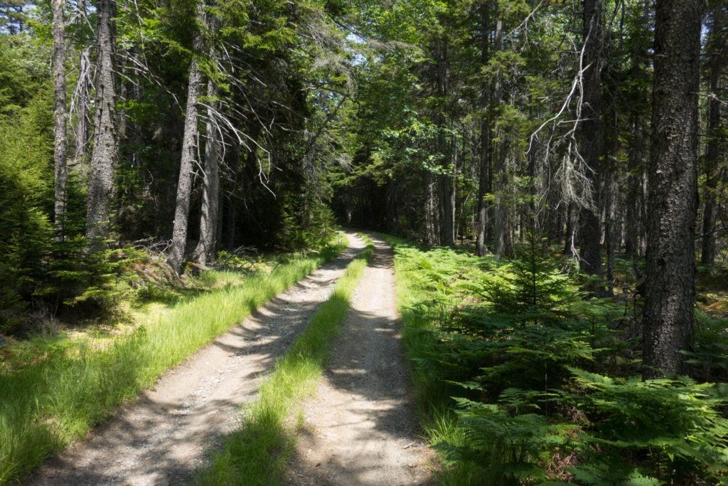 Acadia: Isle au Haut Main Road
