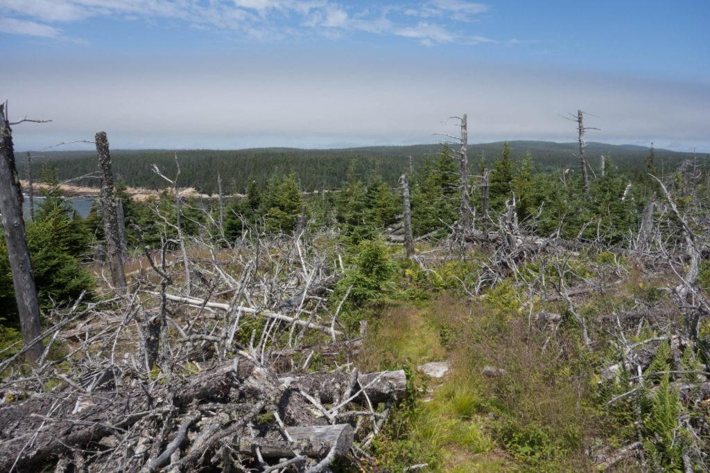 Acadia: Thunder Gulch Fallen Trees