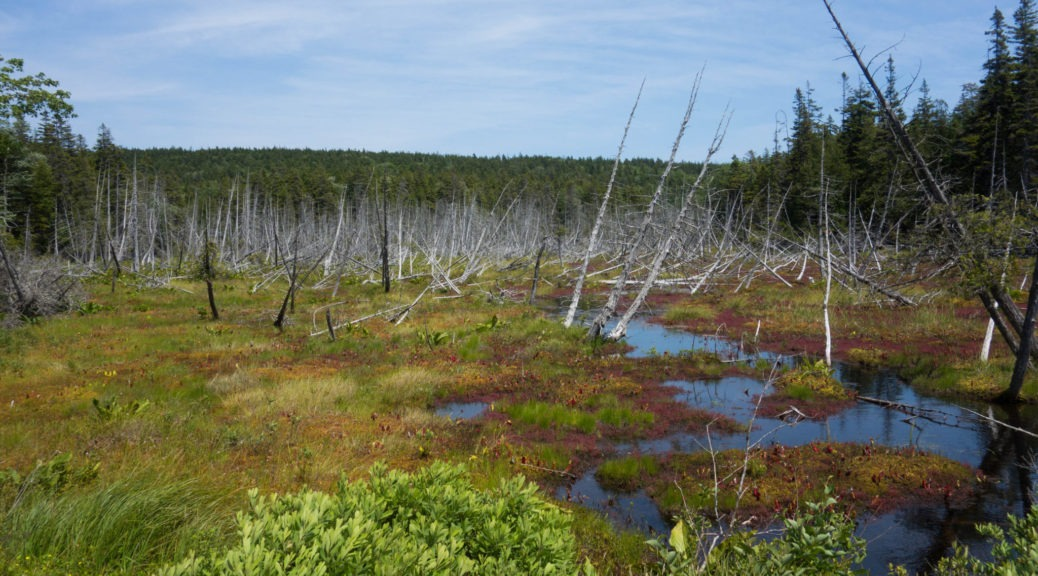 Acadia: View of bog along main road