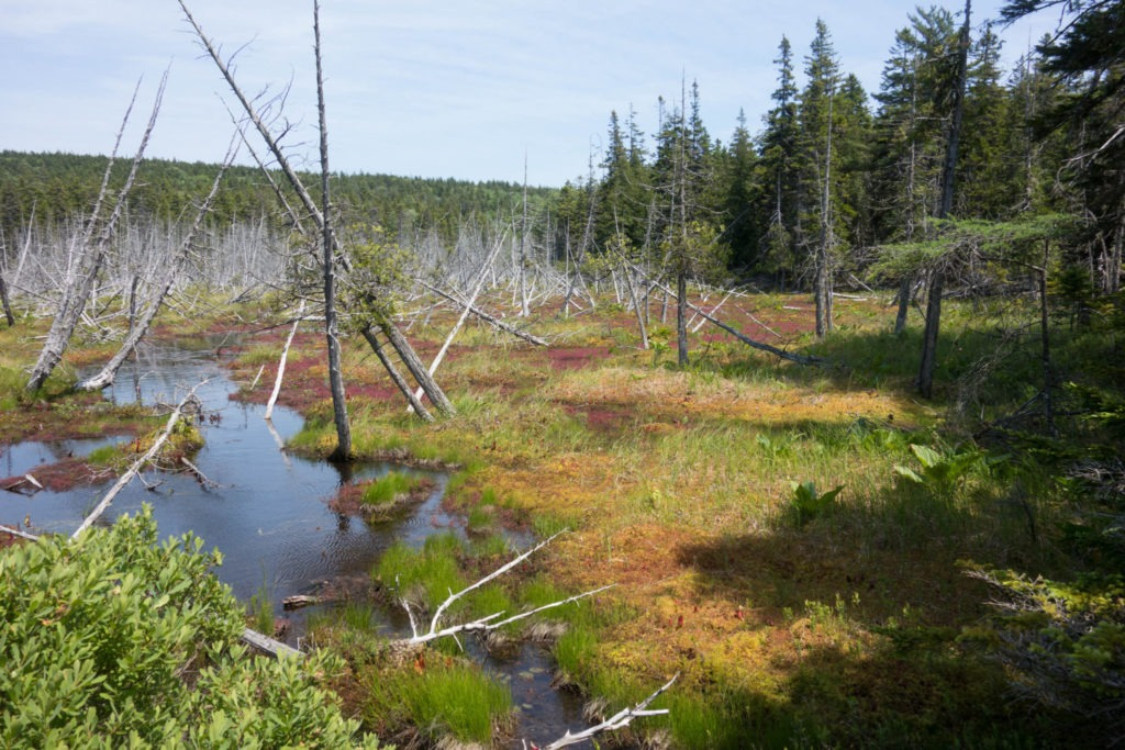 Acadia: View of Bog on Isle au Haut
