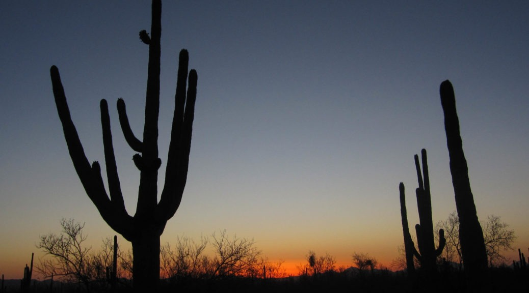 Saguaro: Sunset at Desert Discovery Trail