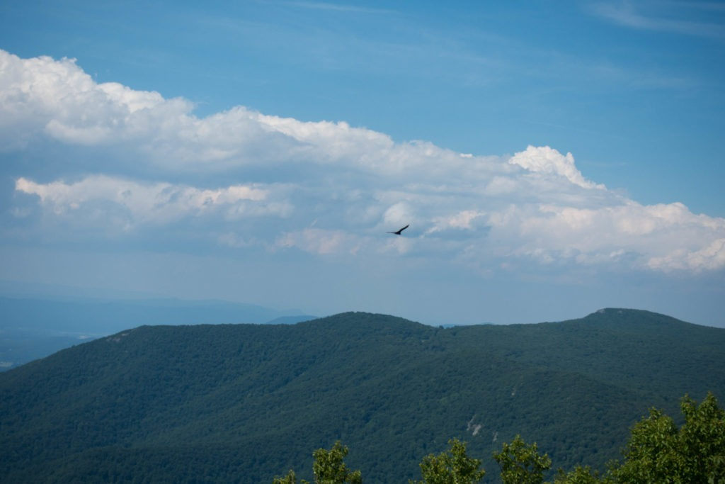 Shenandoah: Bird on Salamander Trail