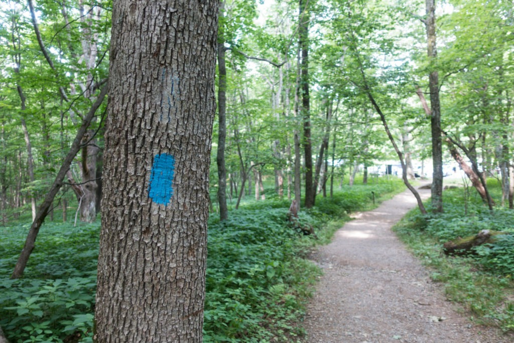 Shenandoah: End of Lower Hawksbill Trail