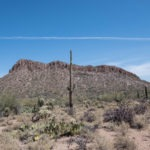 Saguaro: Picture Rocks from Ringtail Trail