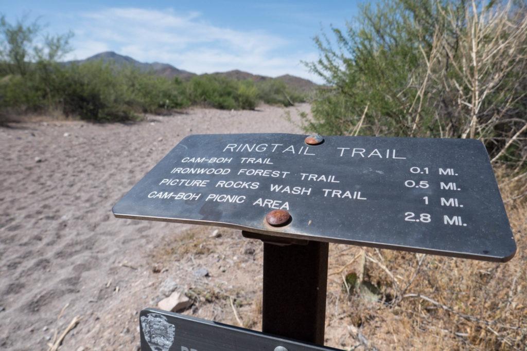 Saguaro: Ringtail Trailhead