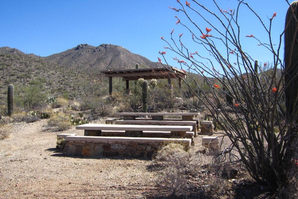 Saguaro: Mam-A-Gah Picnic Area