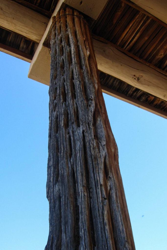 Saguaro: Mam-A-Gah Shelter with dead Saguaro