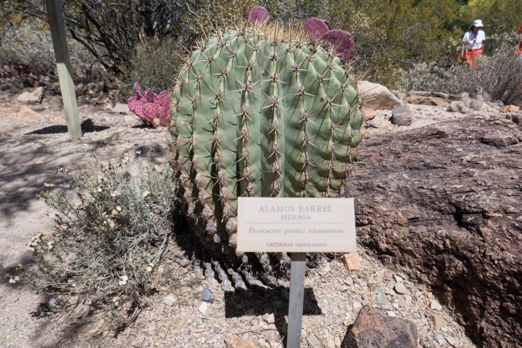 Saguaro: Arizona-Sonora Desert Museum Plant Label
