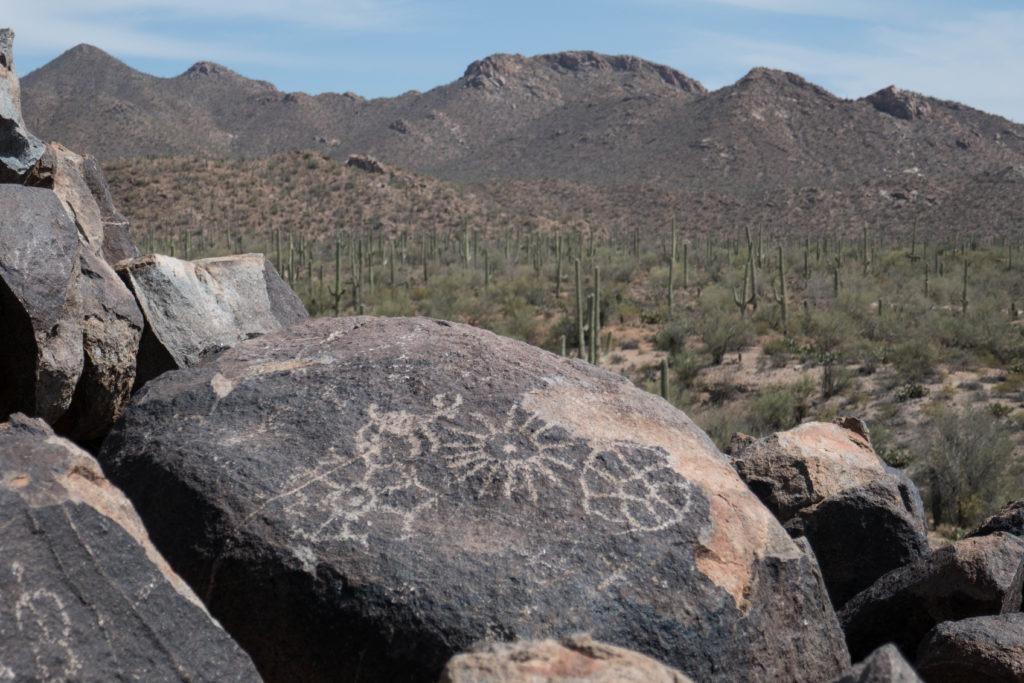 Saguaro: Other Signal Hill Petroglyphs
