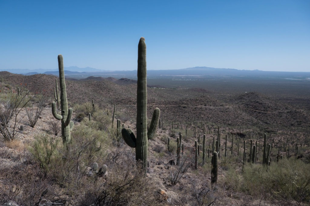 Saguaro: View from Sendero Esperanza Trail