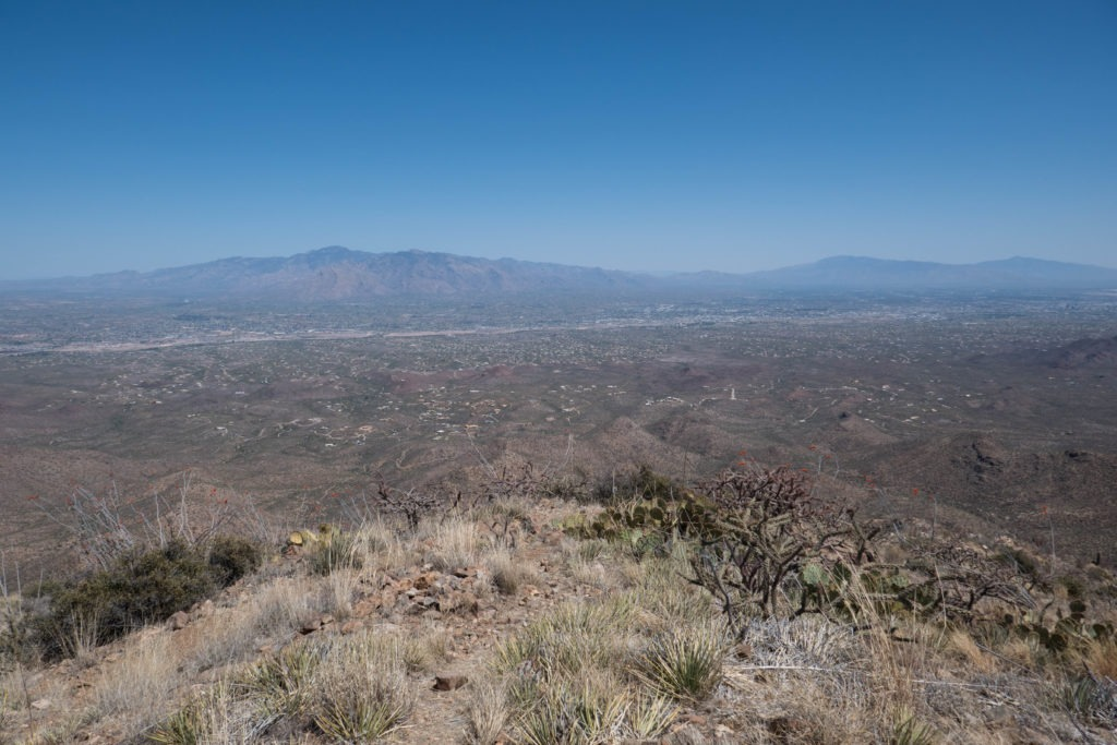 Saguaro: View from Wasson Peak