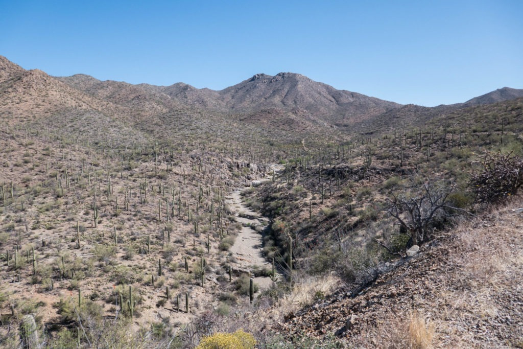 Saguaro: View of King Canyon Wash