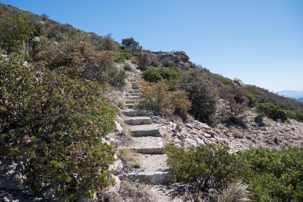 Saguaro: Stairs Next to Manzanita on Heartbreak Ridge Trail