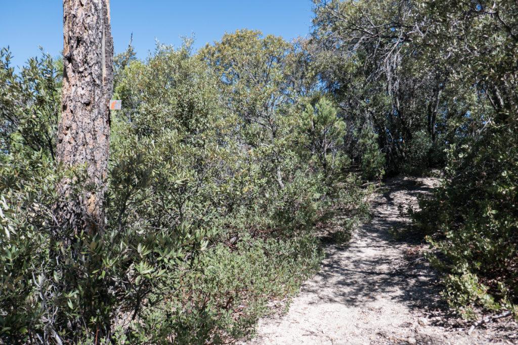 Saguaro: Trail Marker on Heartbreak Ridge Trail