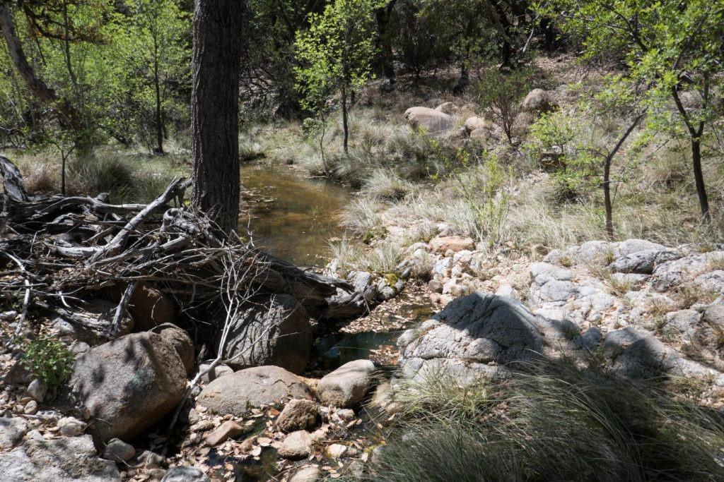 Saguaro: Miller Creek