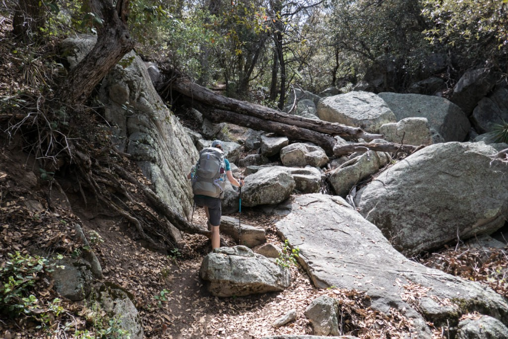Saguaro: Miller Creek Wooded Area