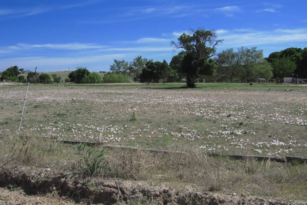 Saguaro: Ranch Near Miller Creek