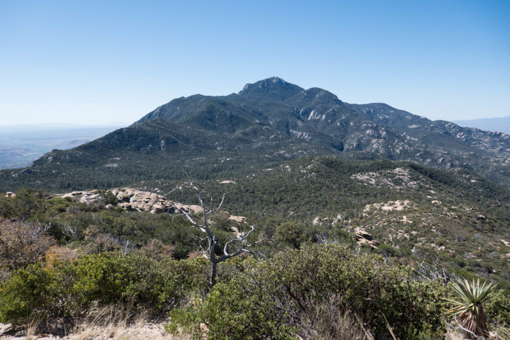 Saguaro: Rincon Peak from Heartbreak Ridge