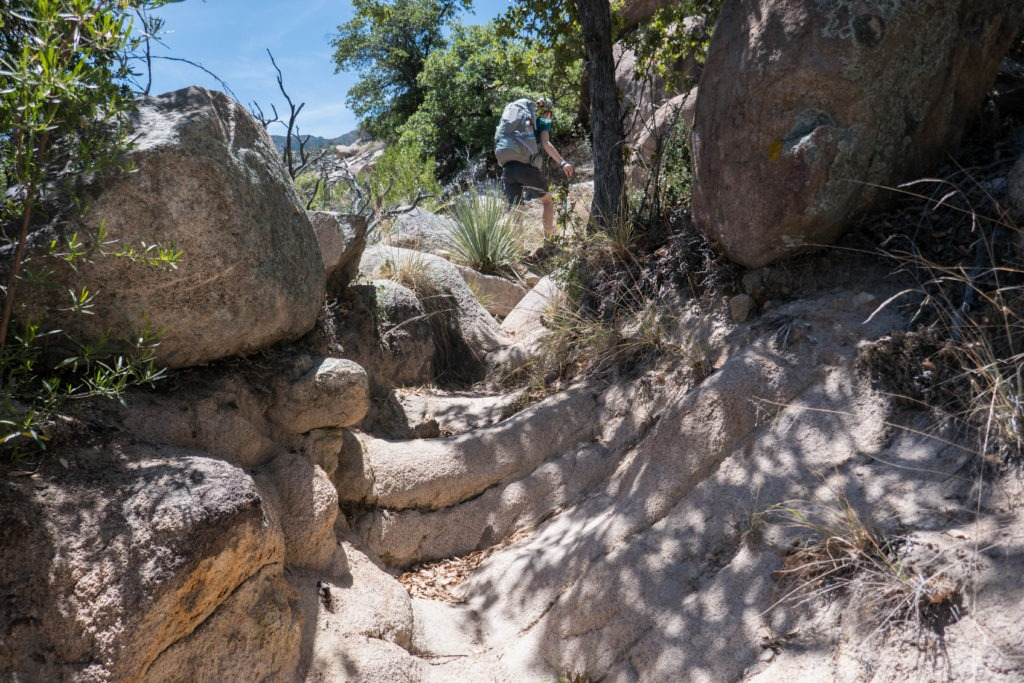 Saguaro: Kristin on Rocky Miller Creek Trail