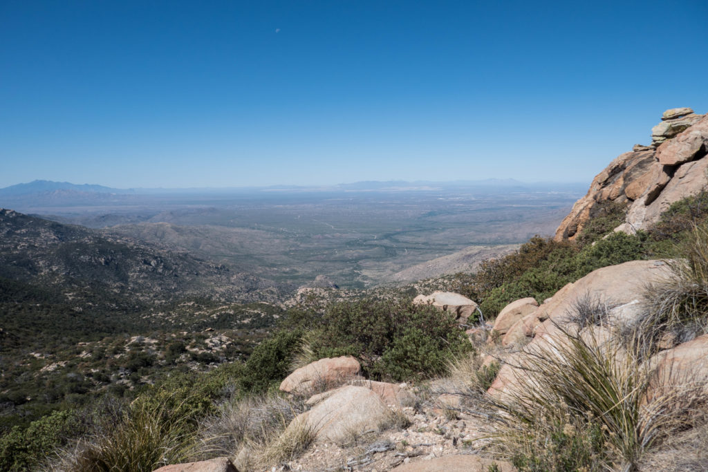 Saguaro: In Happy Valley Saddle, View Towards Tucson