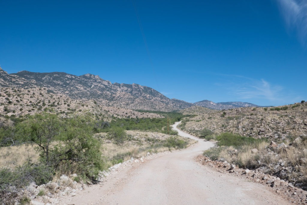 Saguaro: Winding Our Way to Miller Creek