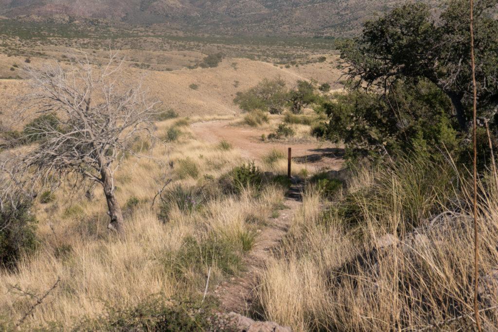 Saguaro: End of Turkey Creek Trail