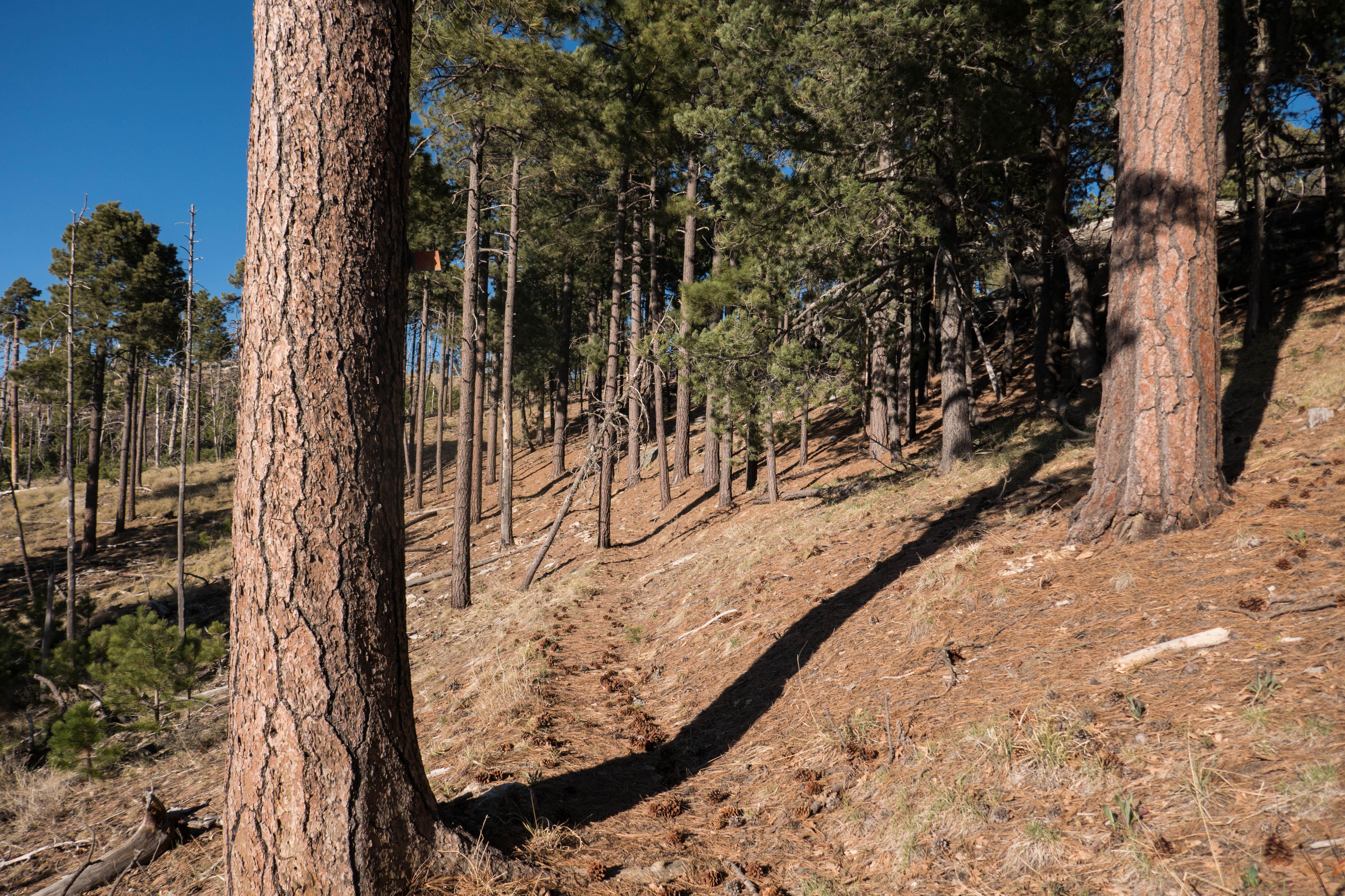 Saguaro: Fire Loop Trail to Spud Rock