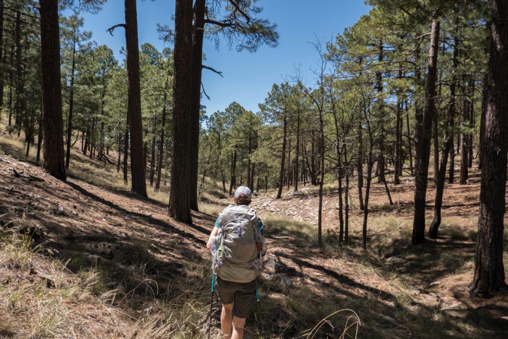 Saguaro: Hiking through pine trees near Devil's Bathtub