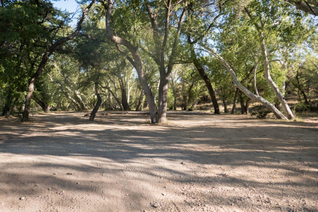 Saguaro: Turkey Creek Camping Area
