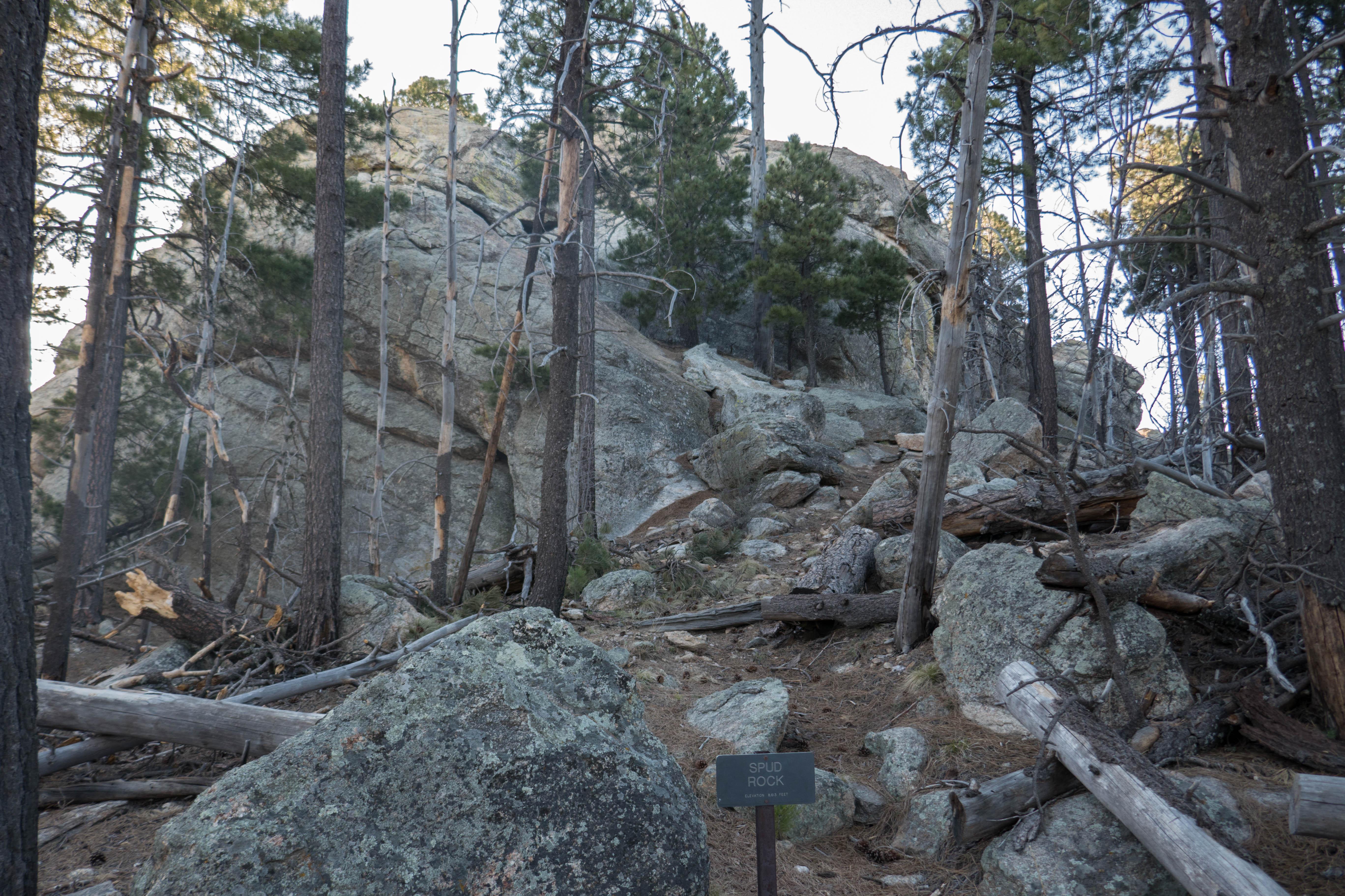 Saguaro: Spud Rock