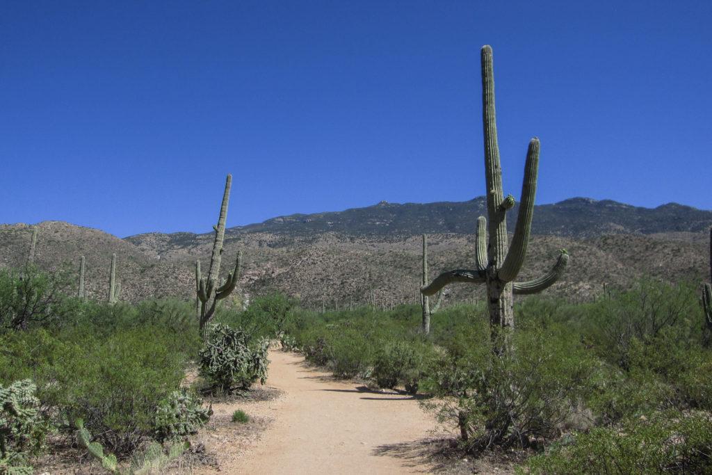 Saguaro: Start of Douglas Spring Trail