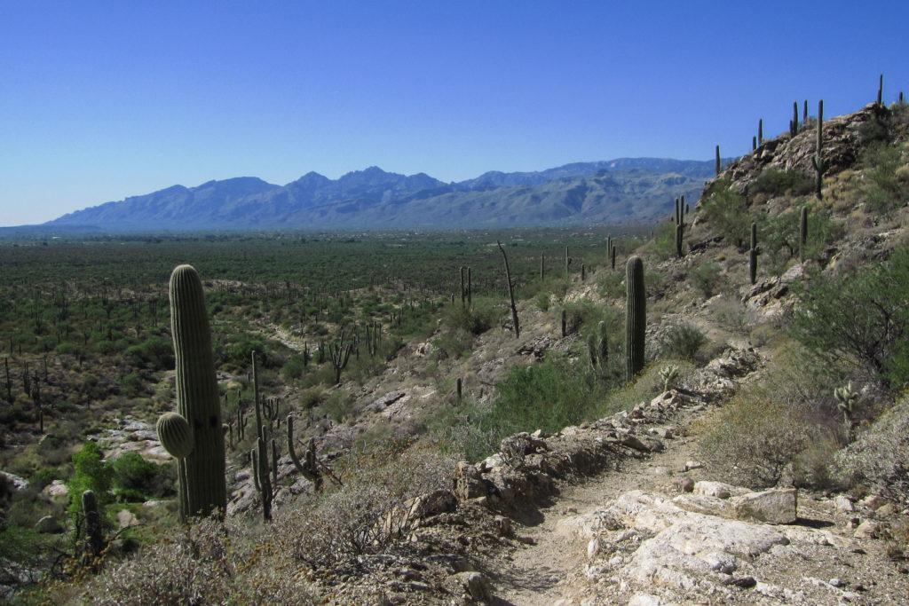 Saguaro: View from Carillo trail