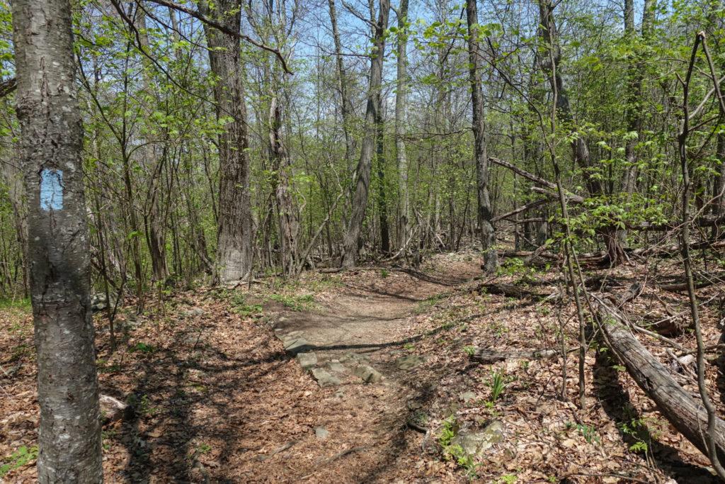 Shenandoah: Near Start of Tuscarora-Overall Run Trail
