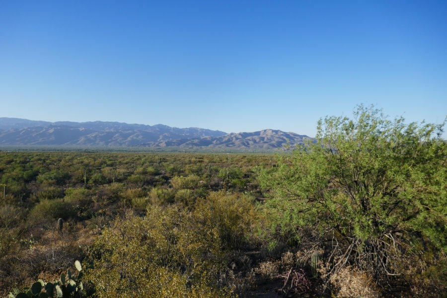 Saguaro: Cactus Forest Loop Drive Overlook