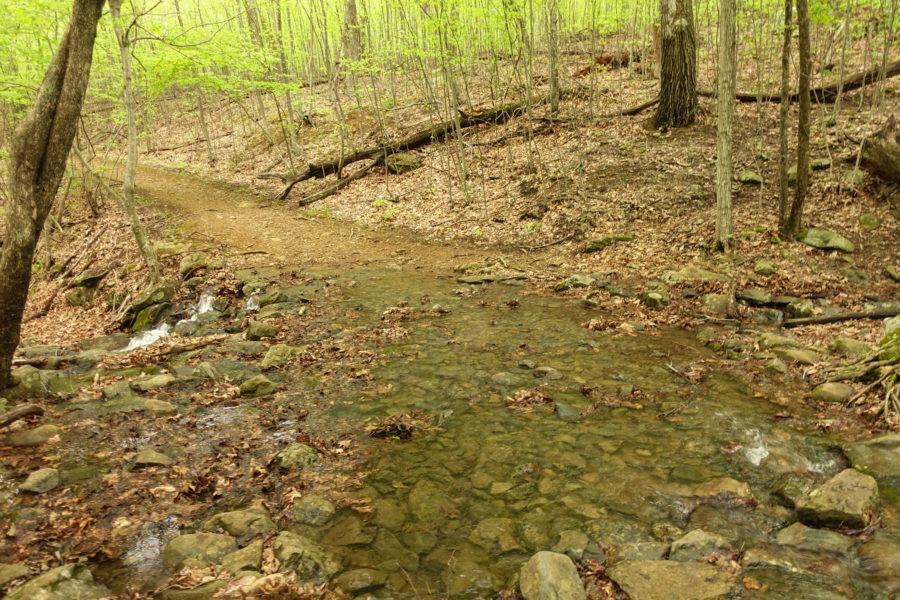 Shenandoah: Overall Run Across Mathews Arm Trail