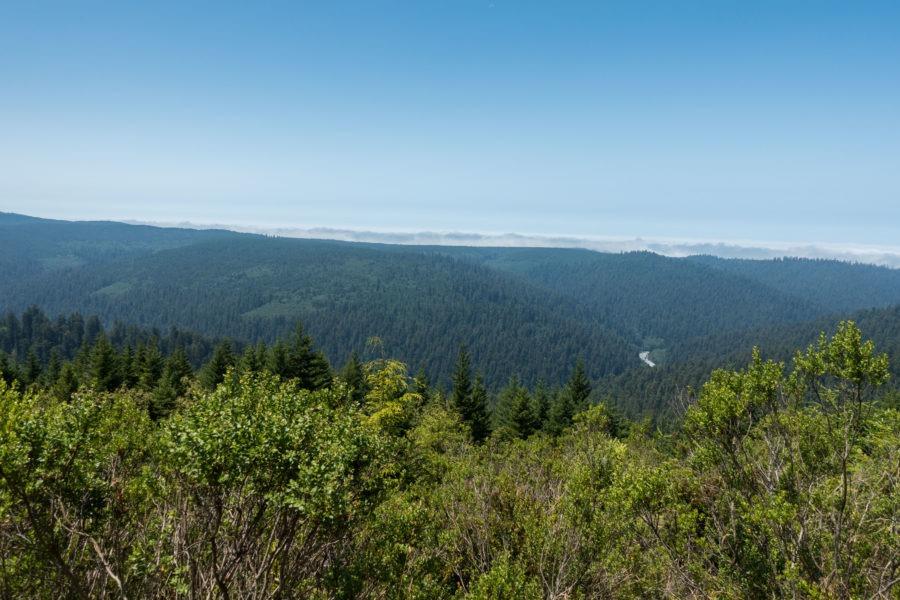 Redwood Creek Overlook on Bald Hills Road