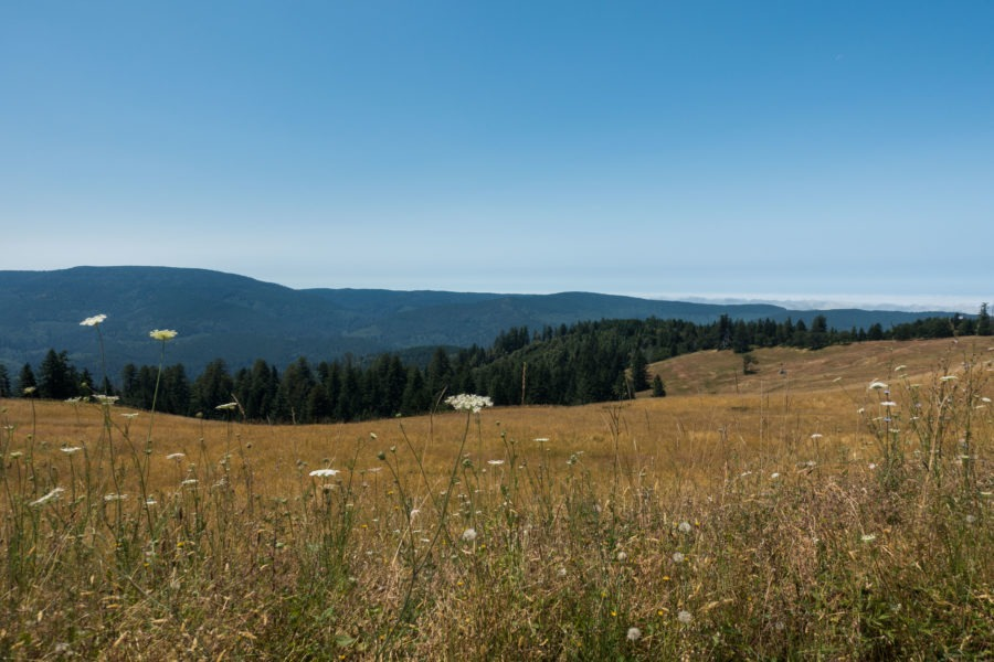 Redwood: Prairie on Bald Hills Road
