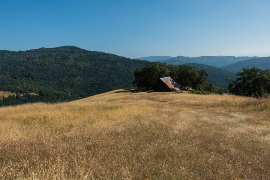 Redwood: View from Long Ridge Road