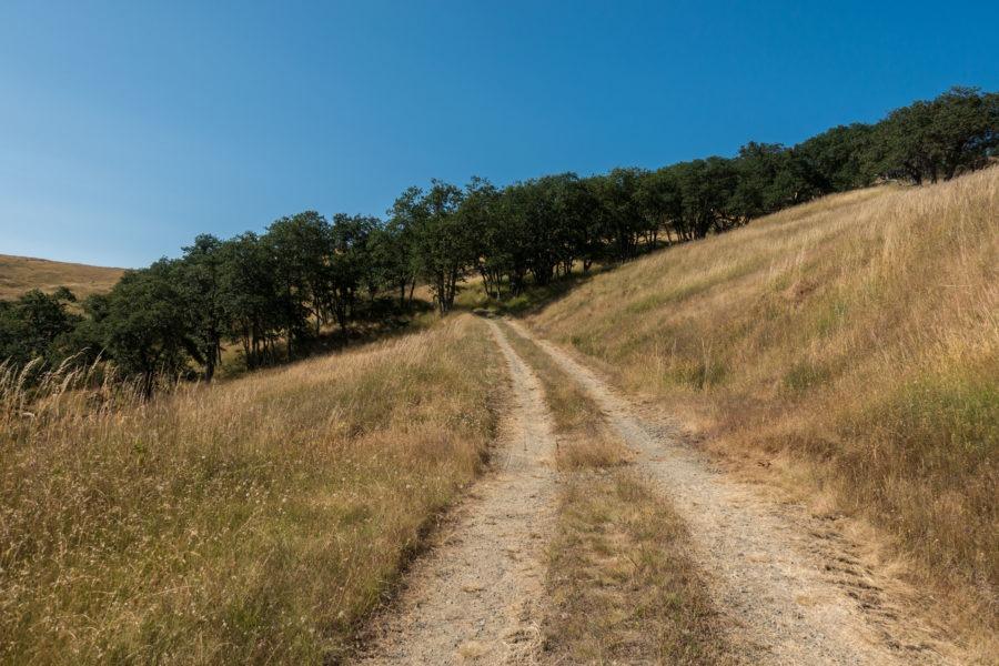 Redwood: Near End of Long Long Ridge Road