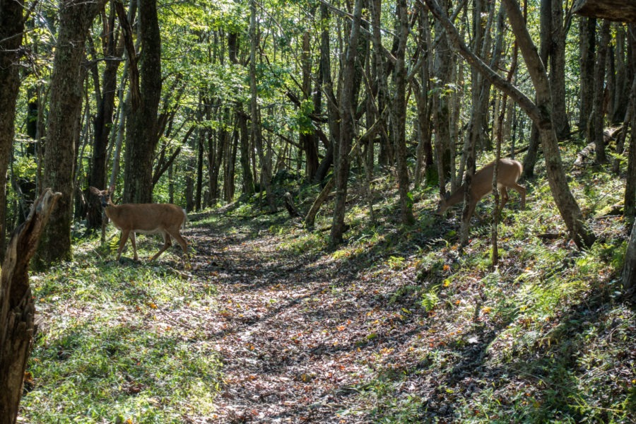 Shenandoah: Deer Crossing Skyland-Big Meadows Trail