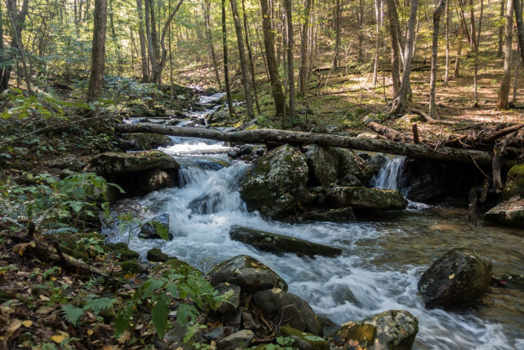 Shenandoah: Hogcamp Branch Running Alongside Rose River Loop Trail