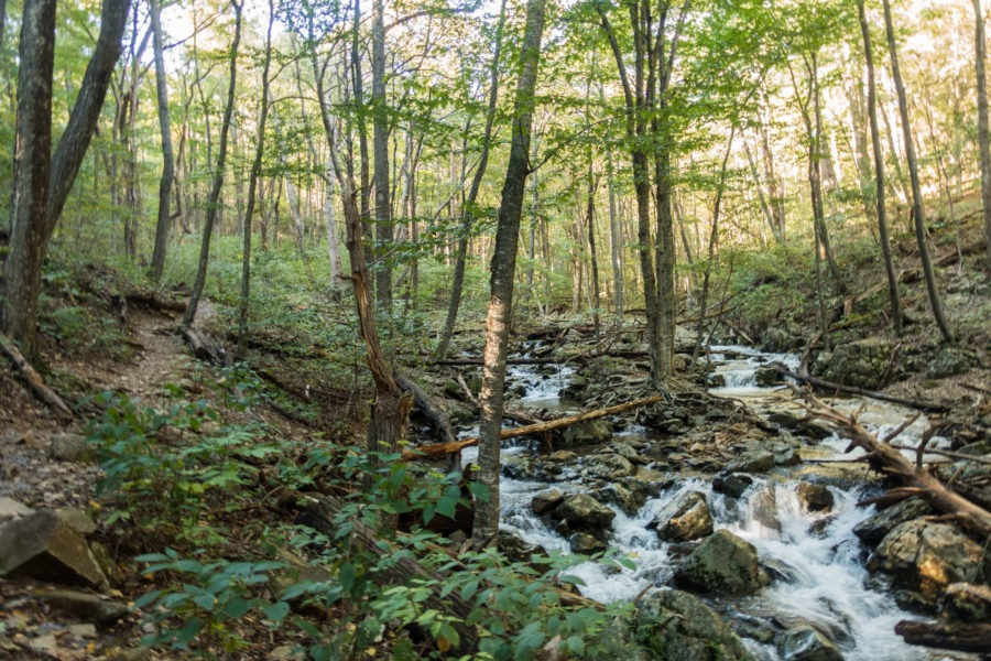 Shenandoah: Rose River Alongside Trail