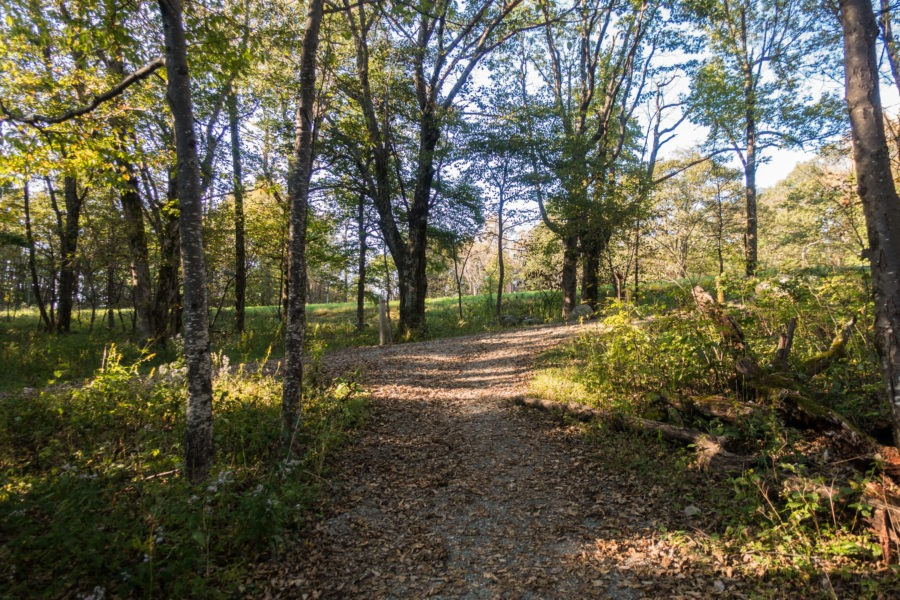 Shenandoah: Rose River Fire Road and Skyland-Big Meadows Trail Intersecting