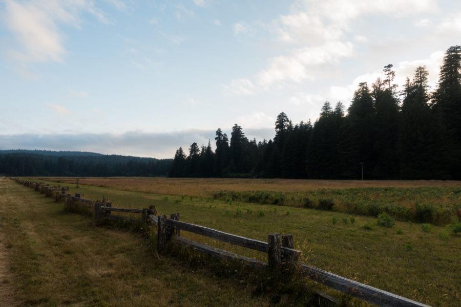 Redwood: Elk Prairie